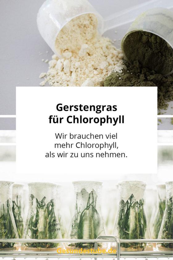Gerstengras für mehr Chlorophyll
