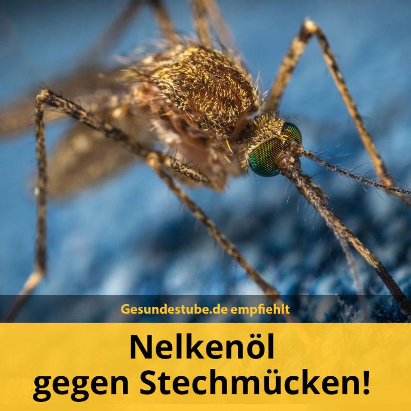 nelkenöl-hilft-gegen-stechmücken